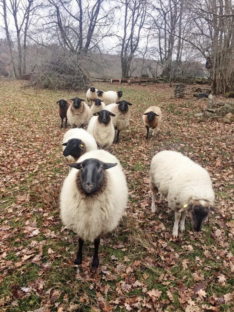 Filzkind Schafe